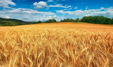 Сельхозназначения (СНТ, ДНП)